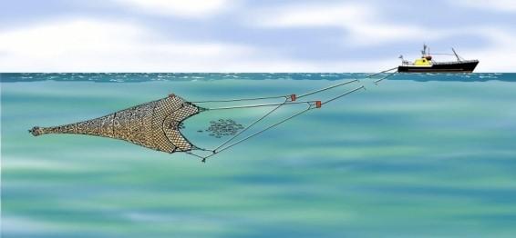 Ifremer – Site Pour une pêche durable.