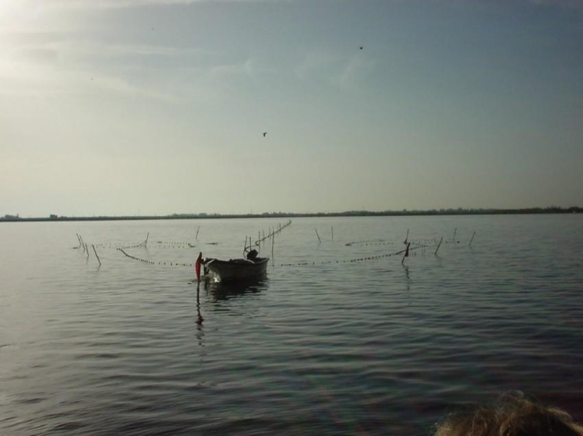 Capetchade dans l'étang de Thau - Copyright Patrick Prouzet