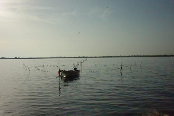 capetchade dans l'étang de Thau_© Prouzet
